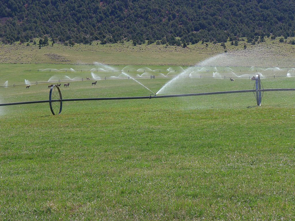 This field near Carbondale is irrigated with water that eventually flows into the Colorado River. The state has wrapped up the first year of an investigation into a program that could pay irrigators to reduce their consumptive use in order to send water downstream to a savings account in Lake Powell.